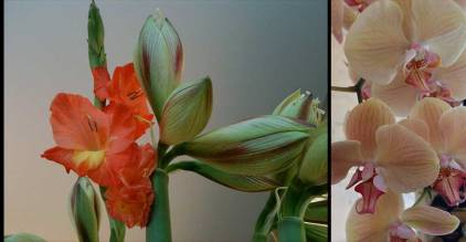 Title: Bouquet Diptych Series-- Medium: Color Photographs on archival paper-- by DSC 2015